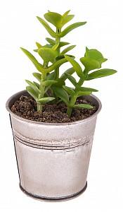 Растение в горшке (8.5х14 см) Сукулента 269-102