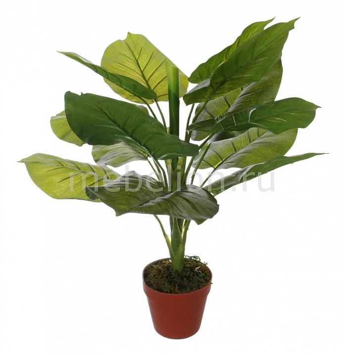 Растение в горшке Home-Religion (63 см) Потос 58008600 растение в горшке home religion 37 см трава 58005400