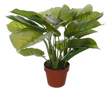Растение в горшке (50 см) Потос 58008500