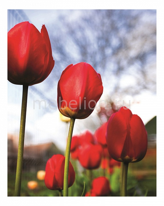 Панно Ekoramka (40х50 см) Тюльпаны 337275934 панно ekoramka 40х50 см париж 11810044